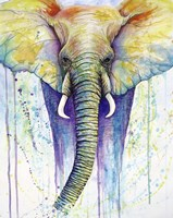 Elephant Colors Fine Art Print