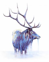 Elk in Water Fine Art Print