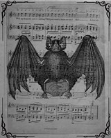 Vintage Bats 2 Fine Art Print