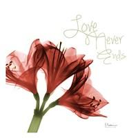 Amaryllis Love Fine Art Print