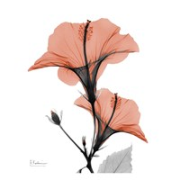 Soft Hibiscus Fine Art Print