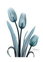 Midnight Sky Tulip Trio Fine Art Print