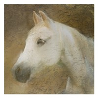 Graceful Horse Fine Art Print