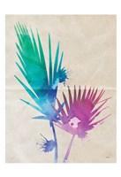 Fan Palm Fine Art Print
