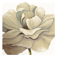 Cream Silken Bloom Fine Art Print