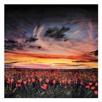 Sunset lit Poppy Field Fine Art Print