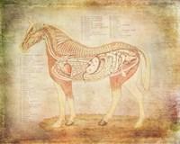 Horse Anatomy 201 Fine Art Print