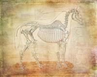Horse Anatomy 301 Fine Art Print