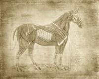 Horse Anatomy 401 Fine Art Print