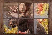 There's a Moose at the Window Fine Art Print