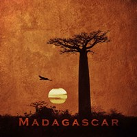 Vintage Baobab Trees at Sunset in Madagascar, Africa Fine Art Print
