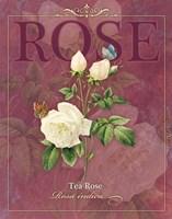 Tea Rose Fine Art Print