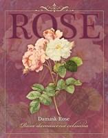 Damask Rose Fine Art Print