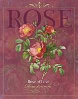 Rose of Love Fine Art Print
