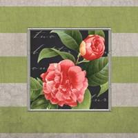 Stripe Rose Fine Art Print