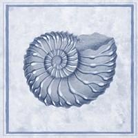 Blue Nautilus C Fine Art Print