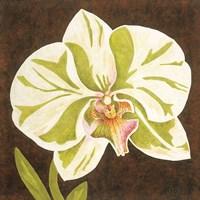 Surabaya Orchid Petites A Fine Art Print