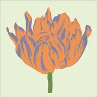 Soho Tulip III Fine Art Print