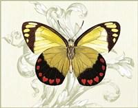 Butterfly Theme II Fine Art Print