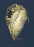 Gold Foil Shell IV on Cobalt Fine Art Print