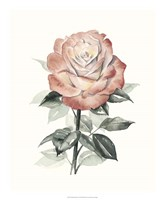 Beholden Rose I Fine Art Print