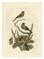Nozeman Birds & Nests  I Fine Art Print