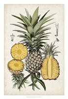 Pineapple Botanical Study I Fine Art Print