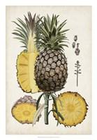 Pineapple Botanical Study II Fine Art Print