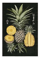 Graphic Pineapple Botanical Study I Fine Art Print