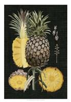 Graphic Pineapple Botanical Study II Fine Art Print