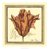 Tulip Study VII Fine Art Print