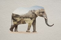 African Elephant Erongo Namibia Fine Art Print