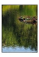 A Floating Garden Fine Art Print