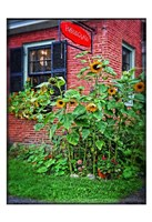 Country Store Sunflowers Fine Art Print