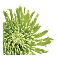 Green Bloom 3 (detail) Fine Art Print