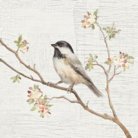 Black Capped Chickadee Vintage Fine Art Print