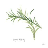 Variegated Rosemary Fine Art Print