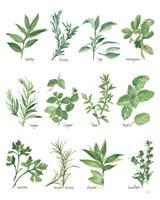 Herb Chart Fine Art Print