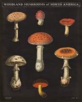 Mushroom Chart III Fine Art Print