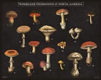 Mushroom Chart I Fine Art Print
