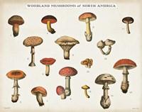 Mushroom Chart I light Framed Print