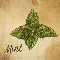 Mint on Burlap Fine Art Print
