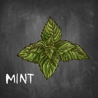 Mint on Chalkboard Fine Art Print
