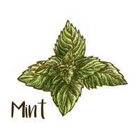 Mint Fine Art Print