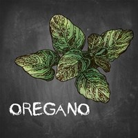 Oregano on Chalkboard Fine Art Print