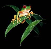 Tree Frog Fine Art Print
