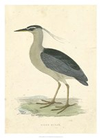 Vintage Night Heron Fine Art Print