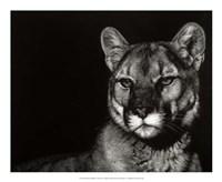 Scratchboard Nightfall Fine Art Print