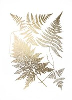 Gold Foil Ferns III Framed Print