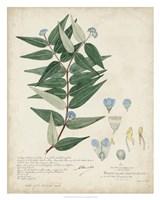 Delicate Blue Descubes II Fine Art Print